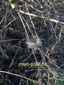 Nest ganz filligran