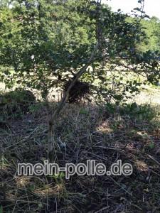 Nest m Strauch